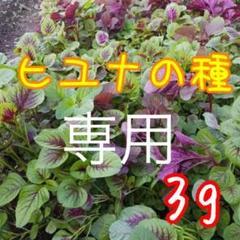 "Thumbnail of ""ベトナム ヒユナ 袋込み3gの種"""