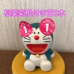 "Thumbnail of ""松葉菊 根付き苗抜苗3本❣️カット苗約60g❤️ 多肉植物✳️ ピンク花"""
