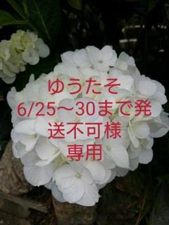 """Thumbnail of """"女の子 半袖  パジャマ 110cm"""""""
