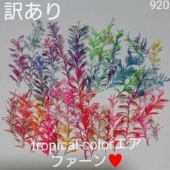 """Thumbnail of """"tropical colorエアファーン♥️訳あり  920"""""""