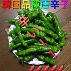 "Thumbnail of ""青唐辛子 韓国品種 愛知県産"""