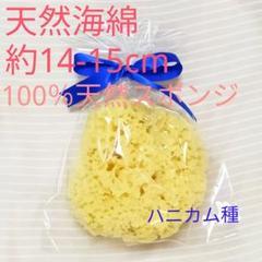 "Thumbnail of ""ミー様専用 高品質 天然海綿 約14-15cmハニカム種"""