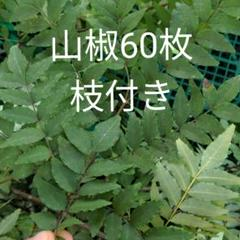 "Thumbnail of ""無農薬 山椒の葉 枝付き 60枚"""