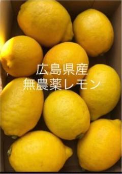 "Thumbnail of ""国産 レモン  広島県産  無農薬 レモン 瀬戸内レモン 1.5kg"""