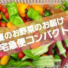 """Thumbnail of """"夏のお野菜のお届けお任せ。宅急便コンパクト。翌日配送地域のみm(_ _)m。"""""""