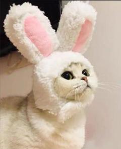 """Thumbnail of """"Mサイズ 猫被り物 ペット被り物 かわいい"""""""
