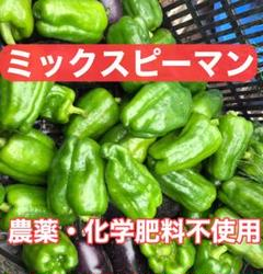 "Thumbnail of ""[本日出荷!]ミックスピーマン 60サイズ 農薬 化学肥料不使用"""