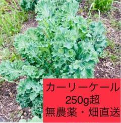 "Thumbnail of ""ケール 250g ネコポス 無農薬 朝採れ"""