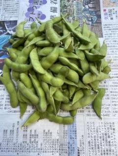 "Thumbnail of ""えだまめ 山形県産 500g"""