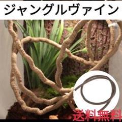 "Thumbnail of ""ジャングルヴァイン(^^)クレスのとまり木にピッタリ♪爬虫類用の装飾用品"""