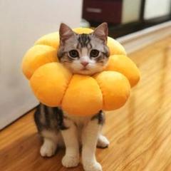 """Thumbnail of """"エリザベスカラー 猫用 犬用 ペット用品 ひまわり型(M)"""""""