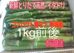 """Thumbnail of """"新鮮 採りたて 天然 新潟産 イタドリ いたどり 山菜"""""""