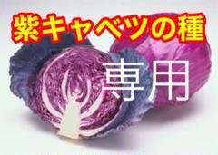 """Thumbnail of """"ベトナム 紫キャベツ 50粒"""""""