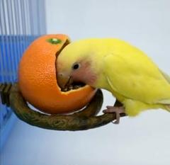 "Thumbnail of ""鳥用品 餌入れ  フードボウル 小鳥 小動物  オレンジ1個"""