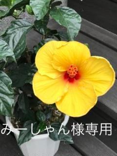 """Thumbnail of """"みーしゃん様専用 Sサイズ ドリーミーブラック フレンチピンク"""""""