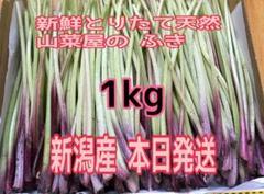 """Thumbnail of """"新鮮 採りたて 天然 新潟県産 フキ ふき 蕗 山菜"""""""