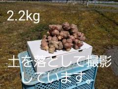 """Thumbnail of """"菊芋 北海道無農薬栽培 2.2kg以上"""""""