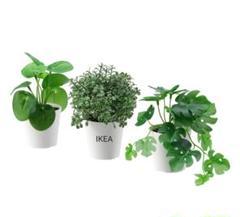 "Thumbnail of ""【NEW IKEAフェイカ】新品イケア IKEA フェイクグリーン 3個セット"""