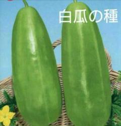 "Thumbnail of ""種 白瓜 シロウリ 漬物用野菜"""