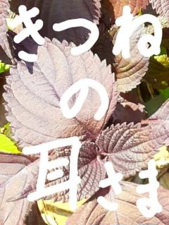 "Thumbnail of ""きつねの耳様専用"""