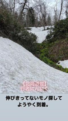 """Thumbnail of """"行者にんにく【そろそろシーズン終わり説】1キロ"""""""
