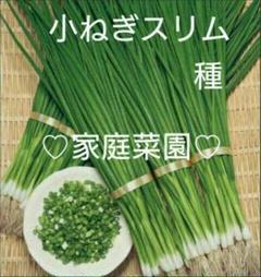 "Thumbnail of ""種 ①小ねぎ ②三つ葉"""
