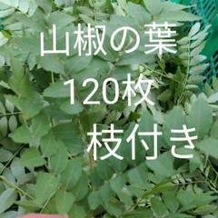 """Thumbnail of """"山椒の葉 120枚 枝付き"""""""