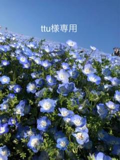 "Thumbnail of ""ttu様専用"""
