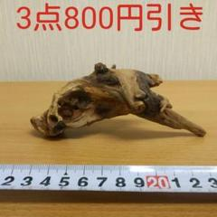 "Thumbnail of ""マングローブ系流木③        アクアリウム 3点同時購入800円引き‼️"""