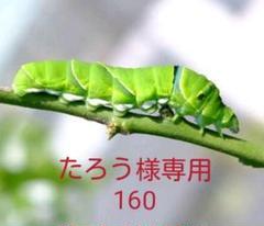 """Thumbnail of """"たろう様 160g"""""""
