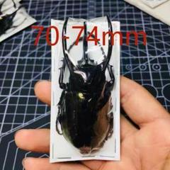 """Thumbnail of """"南洋カブト虫の標本"""""""