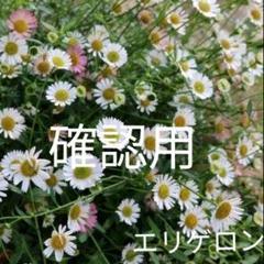 "Thumbnail of ""エリゲロンの種+おまけ"""