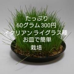 "Thumbnail of ""うさぎ イタリアンライグラス種"""