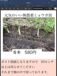 "Thumbnail of ""ミョウガ苗 6本"""