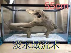 "Thumbnail of ""T3 淡水域流木 大型 アク抜き済み 爬虫類 哺乳類 アクアテラリウム 登り木"""