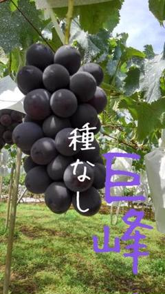 "Thumbnail of ""ぶどう【巨峰】2キロ箱"""