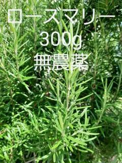 "Thumbnail of ""採れたて ハーブ ローズマリー300g 切り枝 無農薬"""