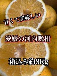 "Thumbnail of ""愛媛県産 河内晩柑 訳あり 箱込み約8㎏"""