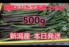 "Thumbnail of ""新鮮採りたて 天然 新潟県産 ワラビ わらび 蕨 山菜"""