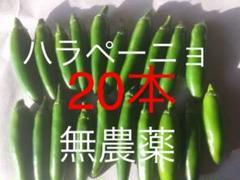 "Thumbnail of ""ハラペーニョ 無農薬 20本"""