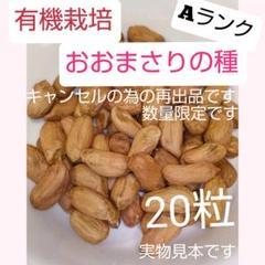 """Thumbnail of """"数量限定♥Aランク粒【有機栽培】落花生おおまさりの種*ゆでピーナッツで大人気♪"""""""