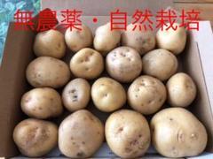 "Thumbnail of ""新じゃがいも 北あかり"""