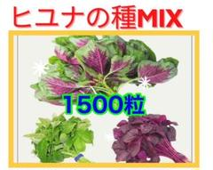"Thumbnail of ""Mix [3色]ヒユナ.アマランサス.ジャワホーレンソウの種 1500粒以上"""