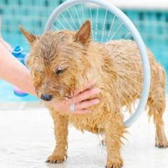 """Thumbnail of """"ペットシャワー ペットウォッシャー ペット風呂 噴霧器シャワー 犬猫入浴"""""""