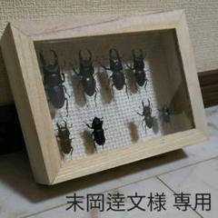 "Thumbnail of ""末岡逹文様専用 昆虫標本"""