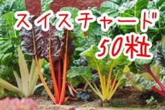 "Thumbnail of ""ベトナム スイスチャード 50粒"""