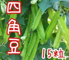 "Thumbnail of ""ベトナム 四角豆 15粒"""
