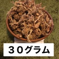 "Thumbnail of ""水苔30グラム"""