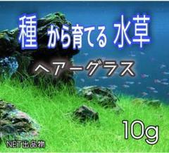 "Thumbnail of ""最安値!プランツシード 種から育てる水草  ヘアーグラス系 10g"""