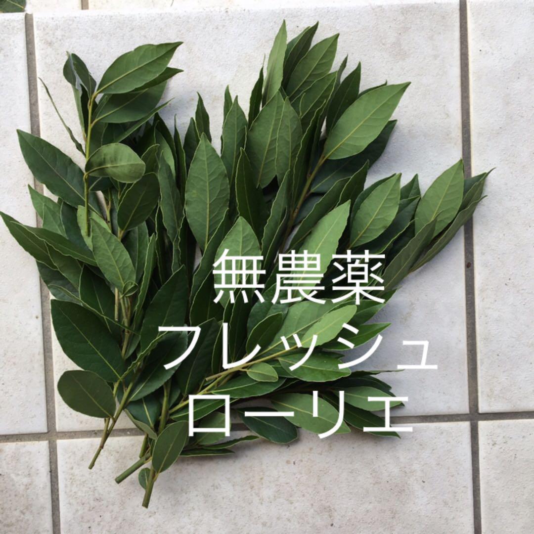 月桂樹  フレッシュ ローリエ 生枝
